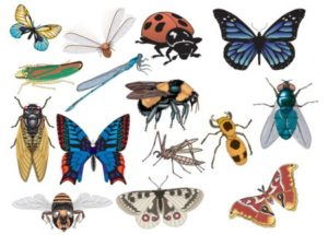 flyers insect vector
